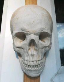 Skull Ornament.