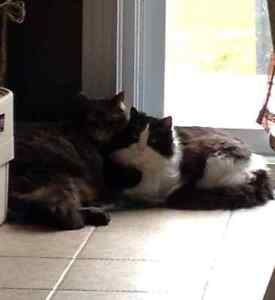 Two free cats-Good home a must
