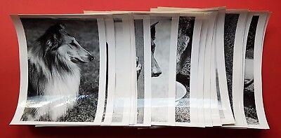 27 x Tier Fotografie Hunde Rassen um 1960/70 DRESDEN mit Dackel Hegewald( F16740