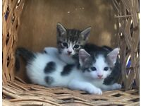 Puurrfect kittens I CAN DELIVER