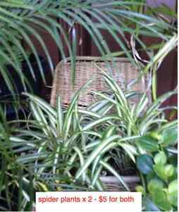 Plants for sale, all healthy and going cheap. From $5.00 Sans Souci Rockdale Area Preview