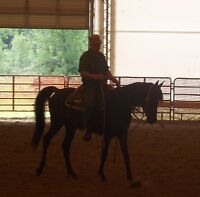 Young Athletic horse: Endurance, dressage, hunter, or western?