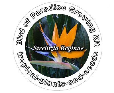 Grow Your Own Stunning Orange Bird Of Paradise Plant Kit - STRELITZIA REGINAE