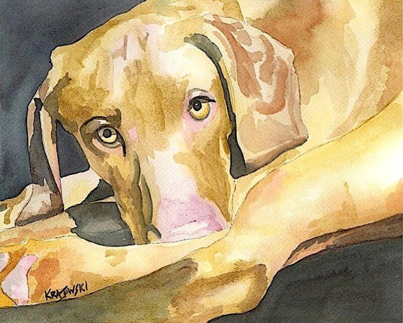 Vizsla Art Print Signed by Artist Ron Krajewski Painting 8x10 Hungarian
