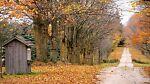 Leaves-R-Falling