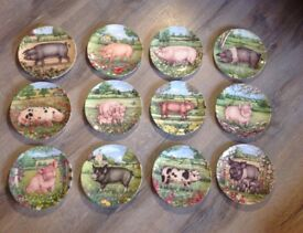 Royal Doulton bone china 'Pigs in Bloom' decorative plates by Debbie Cook
