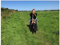 Dog walker & Dog Sitter Cookridge