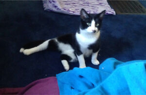 1 year old male cat looking for a forever home
