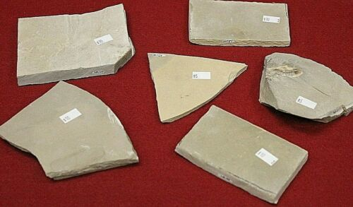 AUTHENTIC BEAR GULCH FOSSILS SIX PIECE LOT  VARIOUS FOSSIL TYPES