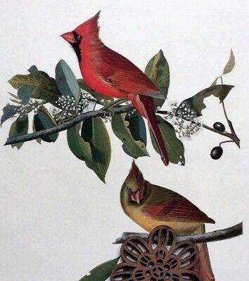 Vtg 1974 Audubon Art Print Bird Full Color Litho 9