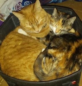 2 cats to be rehomed