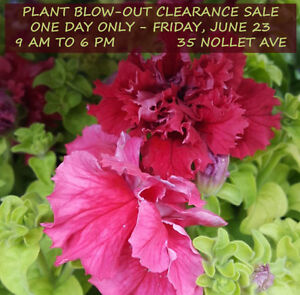 Greenhouse Blow-out Clearance Sale