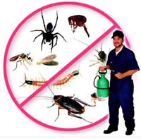 AFFORDABLE PEST CONTROL ; BED BUG ,COCKROACH MOUSE& RAT REMOVAL