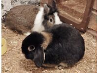 Thumper and Twilight are looking for a good home