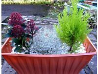 Lovely Xmas! Evergreen Outdoor Planters Great for New Home/Patio/Pub Beer Garden