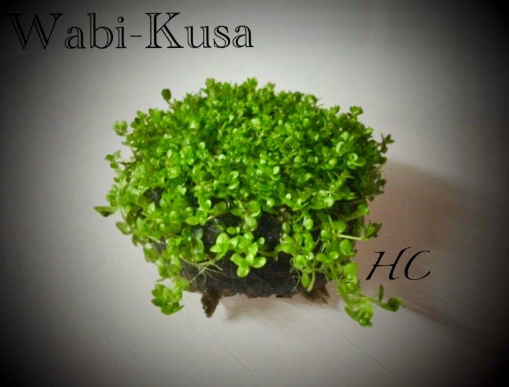 wabi_kusa