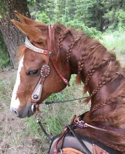 13 year old Qh mare!!