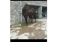 Full loan horse