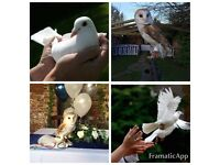 Dove Release and Beautiful Barn Owl encounter for Weddings, Christenings and any other events