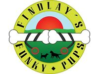 Findlay's Funky Pups (Dog walking / walker and pet service)