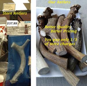 Antler dog chews (CWD Free)