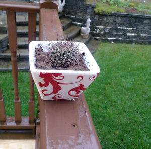 Lovely CACTUS plant & cute ceramic pot