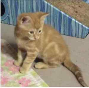 Wanted: looking to adopt an orenge Cat.