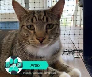 Artax - Friend to All