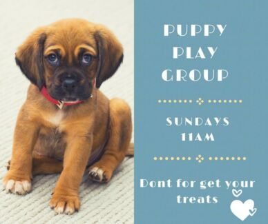 Puppy Play Group