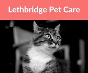 Care for your pets over the holidays