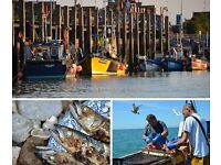 Get the freshest fish in London with a sustainable Faircatch fish box - collect SW18, 11, 19 & 15