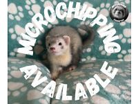 Microchipping for Dogs, Cats and Small Animals