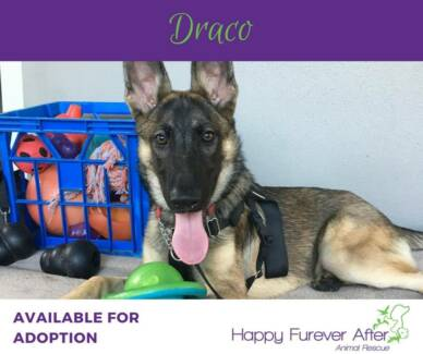 Give Draco a Happy Furever After
