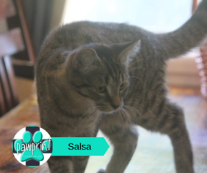 Salsa - Adorkable