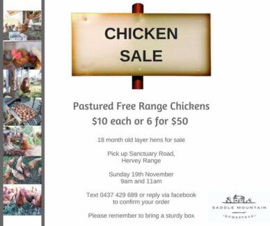 Layer Chickens For Sale
