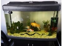 **120L fish tank with stand**