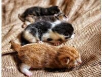4 kittens ready for new homes on 5th of January