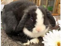 Stunning baby buck bunny rabbit