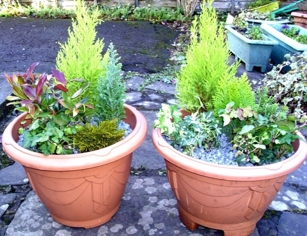 SUPERB Evergreen Planted Container Set Great for New House/Patio/Pub Beer Garden