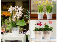 Flower pots, Lace, Planters, Plant pots, Garden, Home decor, Decorative, Small, Large