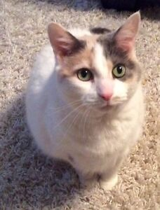 Calico cat free to good home