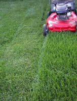 (GREAT PRICES) Hamilton Area Lawn/Property Maintenance Service