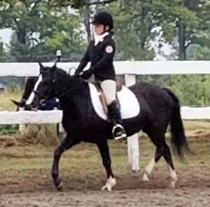 Reg. Welsh Cob Mare For Sale - Black with chrome