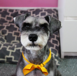 SATURDAY Pet Grooming Available