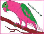 PLUS SIZE Pink Parrot Clothing