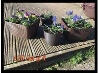 Set of 4 Ratten planters