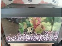 2ft/1ft Juwel aquarium + fish and accessories for sale