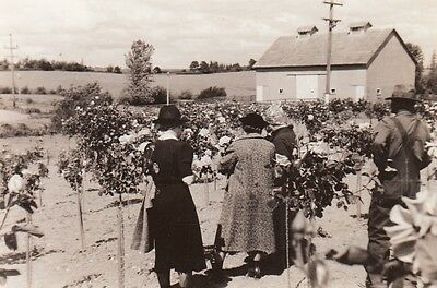 Antique Photo - Oregon Women in Rose Garden on Farm - Early 1900s Antique Rose Farm