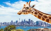 Zoo ticket school holiday price $20 Wiley Park Canterbury Area Preview