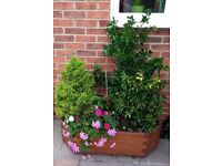 Wooden Trough (H)290mm (L)995mm with plants